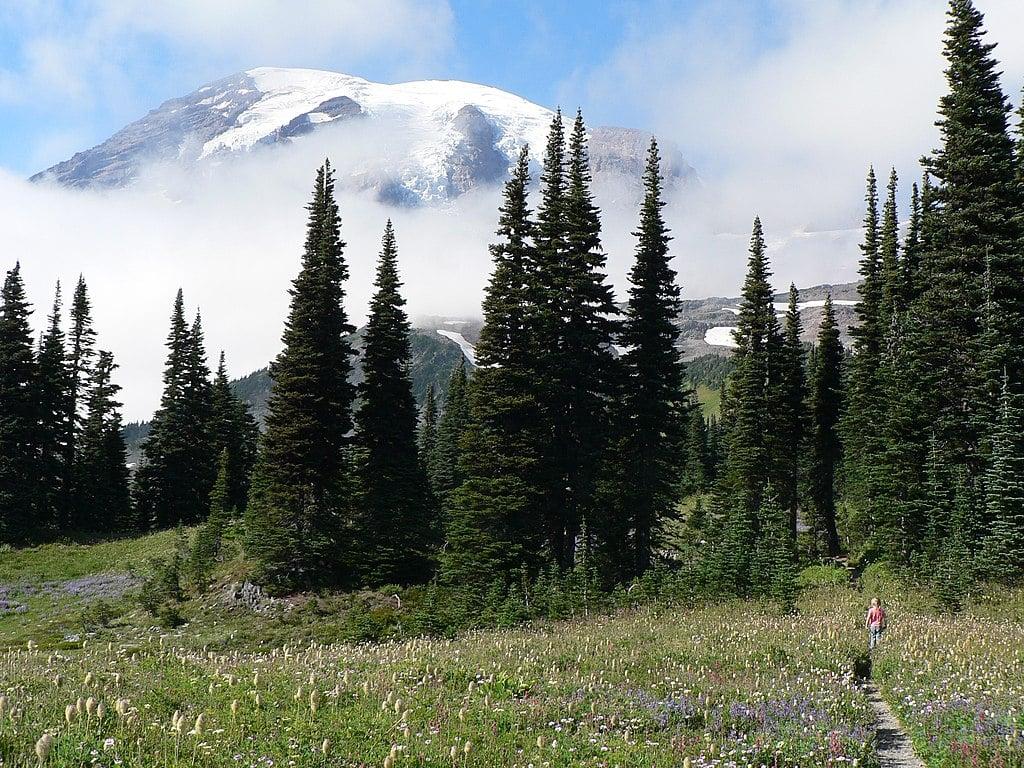 Alpine Fir Trees