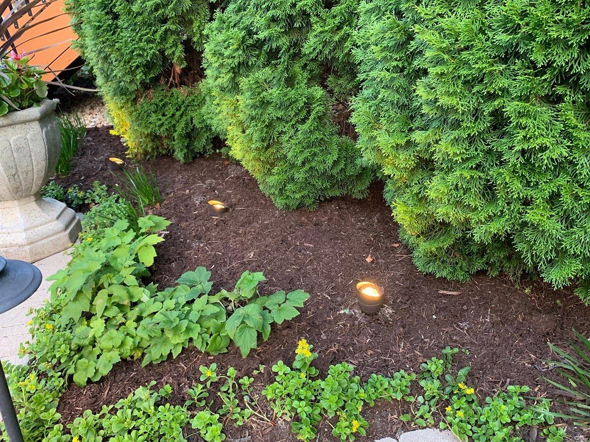 landscape lighting near shrubs
