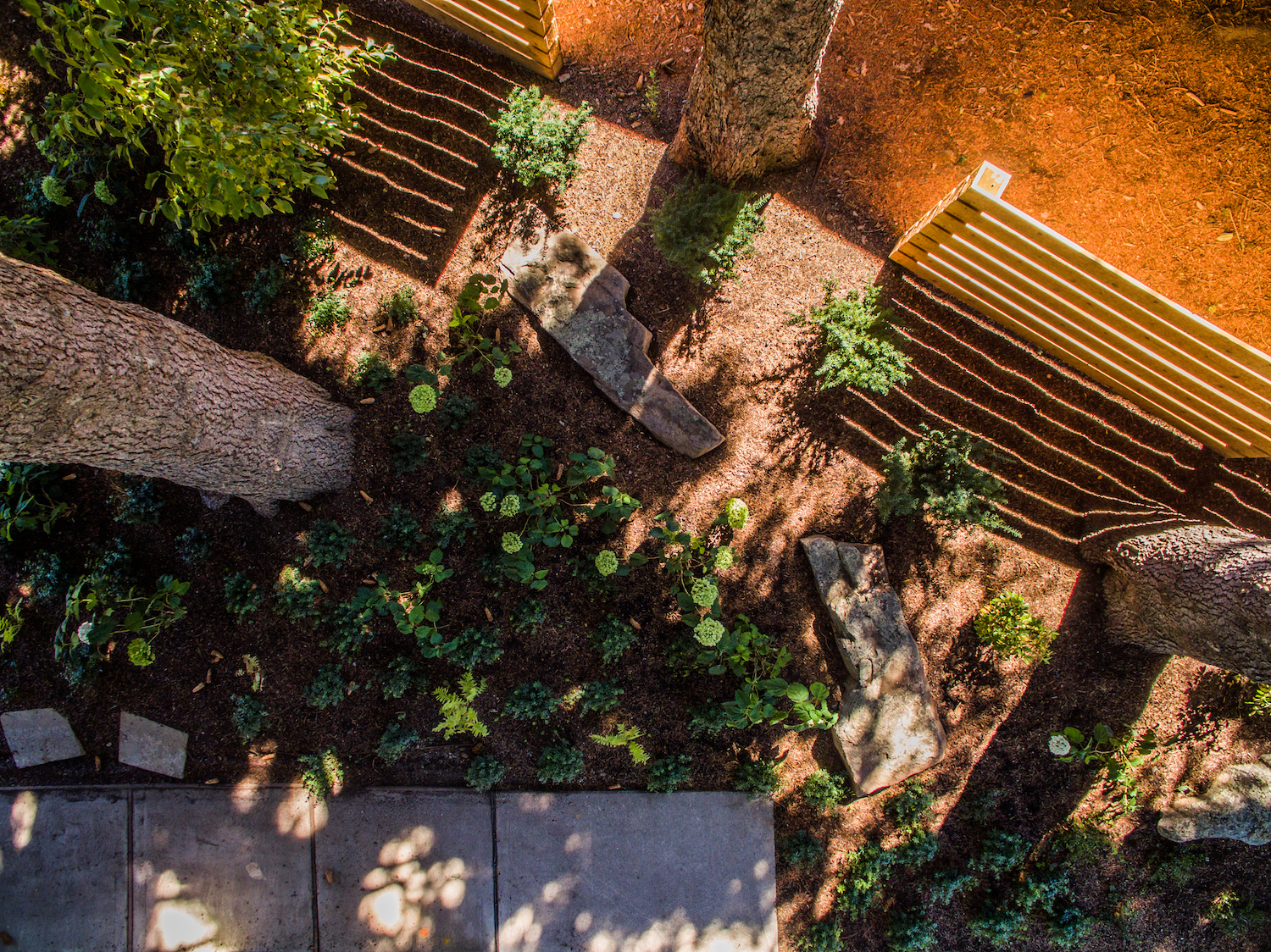 overhead view of plantings