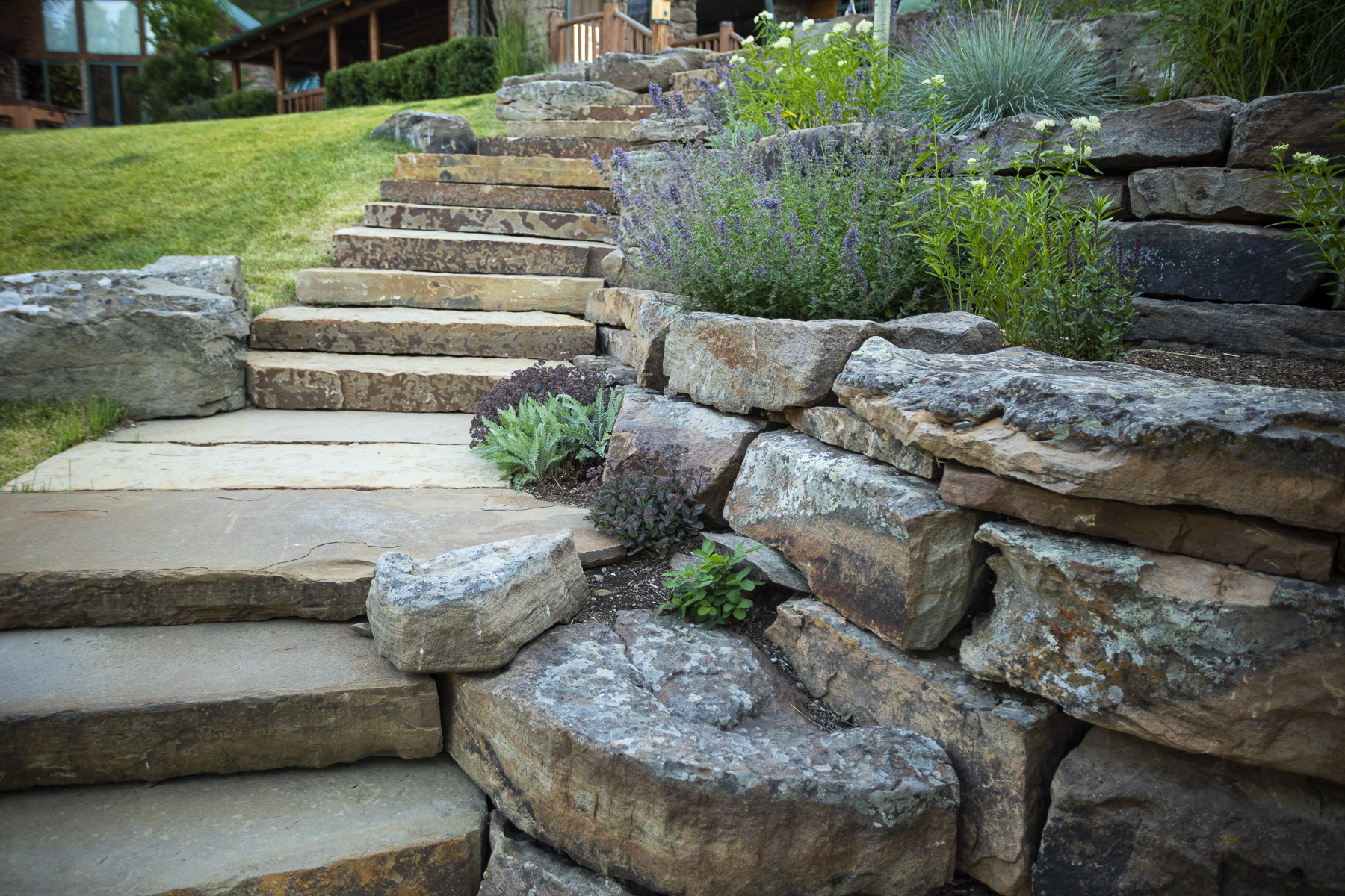 Landscaping along pathway with herbs and edible plants