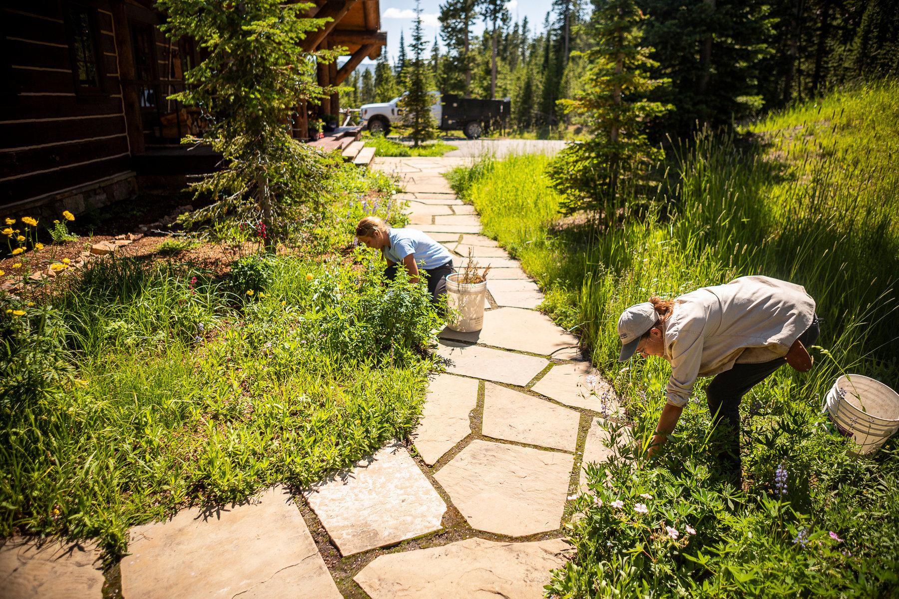 team maintenance around walkway