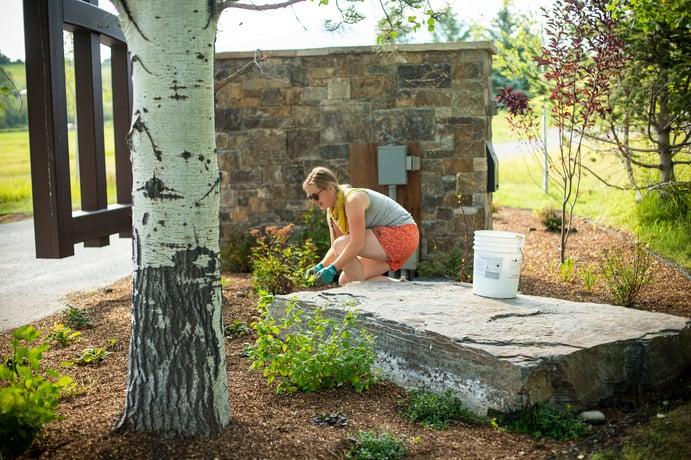 landscape maintenance weeding
